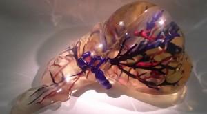Medicine 3D Printed Liver